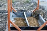 Kastamonu'da sokak hayvanları için 'beslenme durakları' oluşturuldu